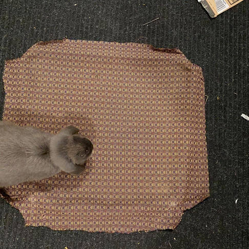 Rae's rabbit Mr. Witherspoon walking on the fabric.
